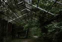 an old collapsed greenhouse stands in a dense green garden