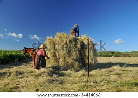 An old couple of farmers load hay onto their hay cart while their dog watches on, and the mule in harness waits patiently