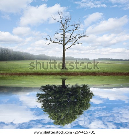 An old dead tree has the reflection of a beautiful big tree.