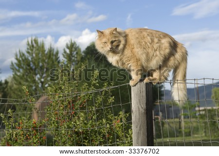 An old farm cat sits atop a fence post waiting for its next meal to scurry by in the grass below.