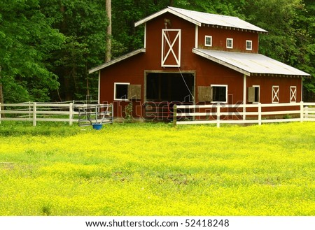 An old horse barn with a butter cup field with room for your text