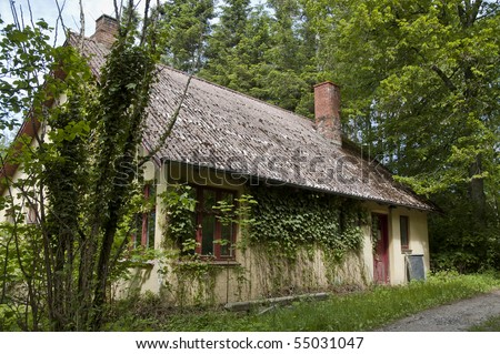 An old house in the lush green woods overgrown with ivy.