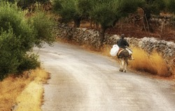 An old lady riding a donkey along a country road in Mani, southern Greece