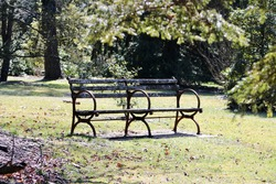 An old park bench made of rotten wood, filled with moss, mold, and mildew. The bench under a tree fits 4 people so that they can overlook the park and enjoy the serenity of wildlife in the arboretum.