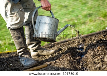 An old peasant with a watering-can  watering the soil in his kitchen garden