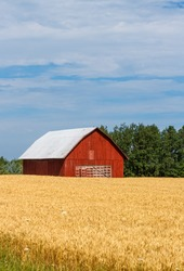 An old red barn in a golden field has an old hay wagon parked in front of it.