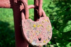 An old rusty lock, covered with moss and lichen on the gate. An abandoned garden. Close-up, macro
