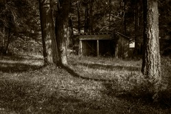 An old shack in the trees in sepia color