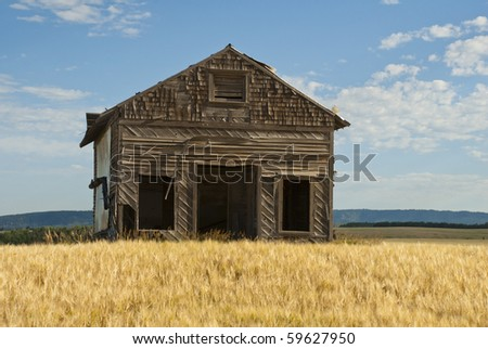 An old shop sits in a ripening field of grain. - stock photo