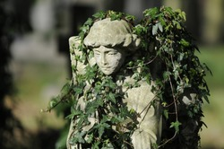 An old statue which has become overgrown with ivy