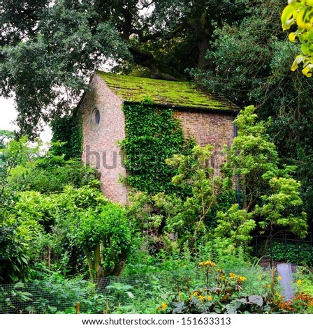 An old stone store house covered in ivy in the woods