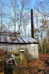 An old sugar shack in the forest