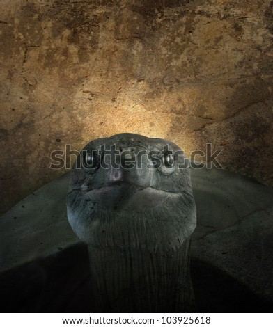 An old turtle is against a textured background. Use it for a zoo or endangered species concept.