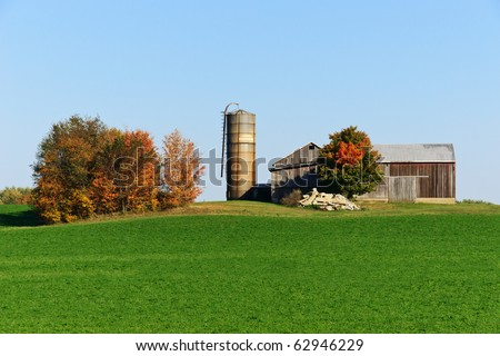 An old unpainted wooden barn and a feed silo sitting next to a field of lush green vegetation with a stand of trees showing vibrant fall foliage