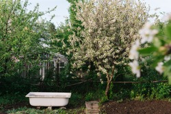 an old white bathtub stands in a vegetable garden