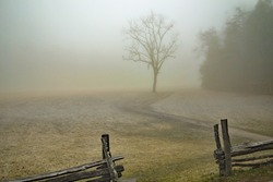 An old wooden fence opens up towards a barren tree and gravel road leading out into a foggy pasture and field on the countryside.