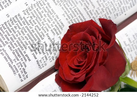 An open bible with a single red rose - stock photo