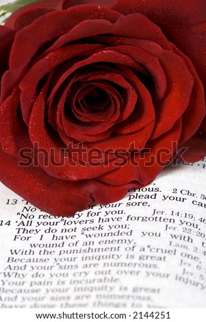 An open bible with a single red rose...  lost love