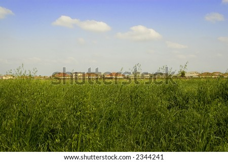 An open field by suburban homes.