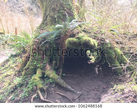 An opening that looks like a cave under a mossy fern-lined tree trunk.