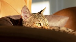 An orange and brown furry tabby cat is looking into the sunlight from above the sofa. The cat's eyes are in the foreground.