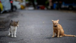 An orange cat and a gray cat are arguing in the parking lot.