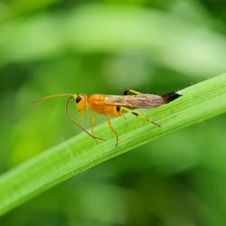 An orange insect perched on the weed