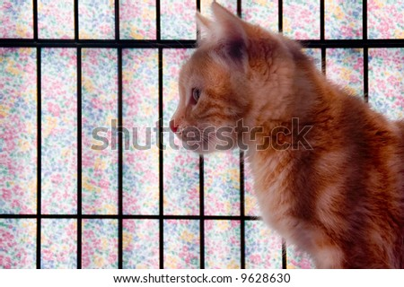 An orange striped kitten in a cage that is covered with pastel gingham cloth.
