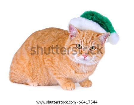 An orange tabby cat wearing a green Santa hat.