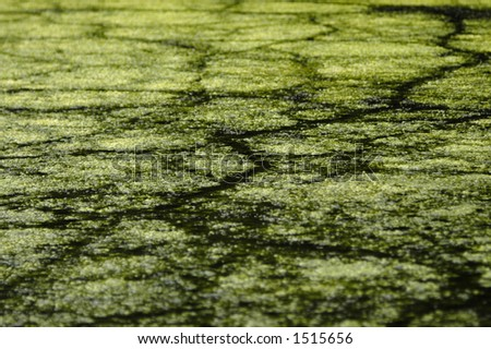 An organic background texture created by algae growth on the surface of a lake bisected by trails created by ducks