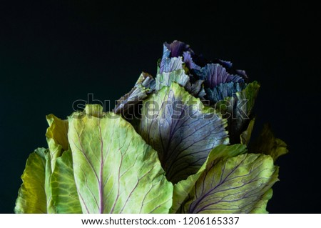 An ornamental cabbage or ornamental kale plant with green and purple leaves in close-up or set against a plain black or dark background. #1206165337