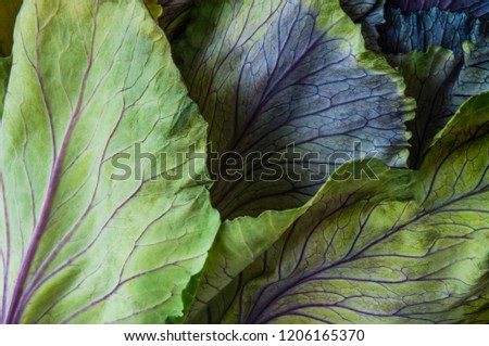 An ornamental cabbage or ornamental kale plant with green and purple leaves in close-up or set against a plain black or dark background. #1206165370