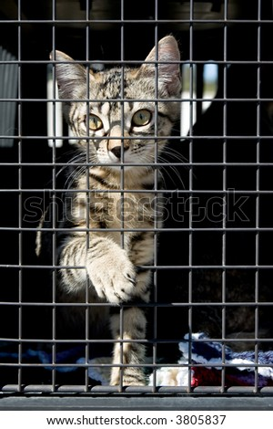 An orphan kitten in a cage, reaching out with one paw.