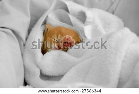 An orphan kitty sleeps snugly in a dry towel.