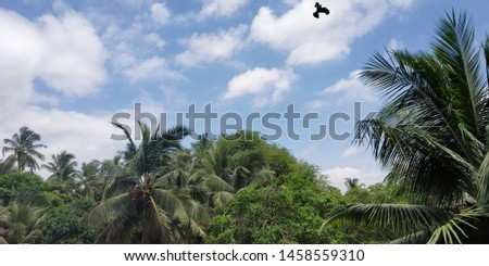 An outstanding pic of mother nature. It incudes palm trees and a bright blue sky  with a local black bird in it. The greenery and the brightness of the blue sky is so rejoicing.