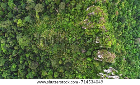 An overhead shot of green rain forest in Asia.