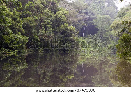 An oxbow lake (an old meander cut off from the main river) beside the rio Tiputini in the Ecuadorian Amazon