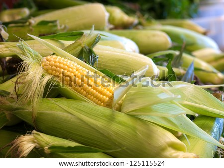 An Partially Shucked Ear of Corn in a Bin of Corn at a Farmers Market