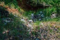 An unauthorized dump of household waste in a pit among thickets of small trees. Concept of pollution of nature with household garbage, unauthorized landfills