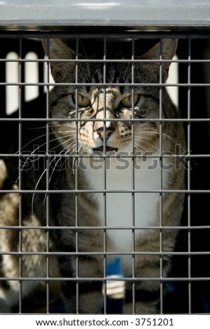 An unhappy cat locked in a cage