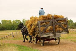 An unknown man on a wagon of hay being pulled by a horse