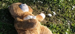An unnecessary forgotten toy on the grass. A torn teddy bear lies on the ground. Violence and forgetfulness concept. White cotton wool is visible from the bear's chest. The filler is around the toy.