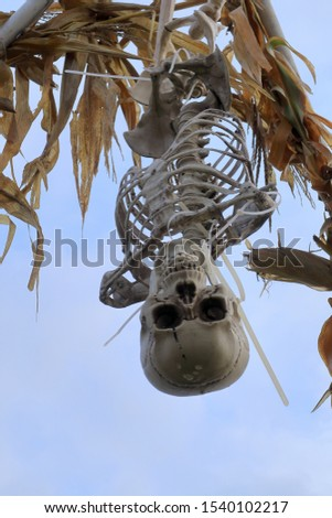 An upside down skeleton hanging overhead to Illustrate the concept of Halloween #1540102217
