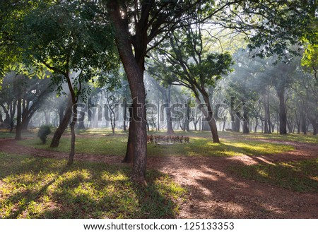 An urban forest in the morning
