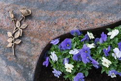 An urn grave with a marble plate and a rose of bronze, beside it purple and white horned pansy