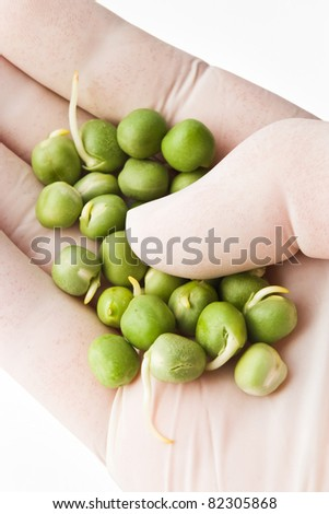 analyzing peas in hand with white gloves