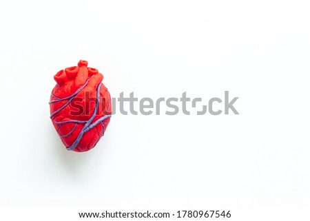 Anatomical heart. White background top view Foto stock ©
