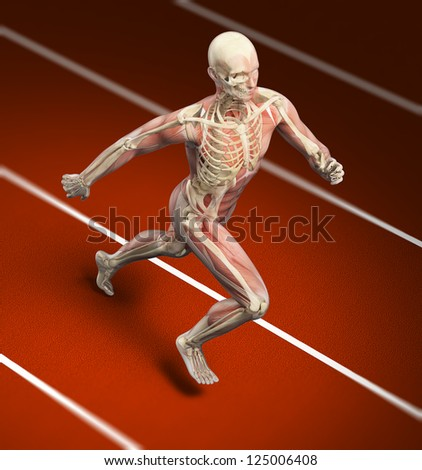 Anatomical illustration of a runner on a sports track