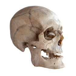 Anatomical  real human skull, closeup. Angle view three quarters. Isolated on white background and clipping path.