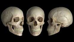 Anatomically correct human skulls on a black background